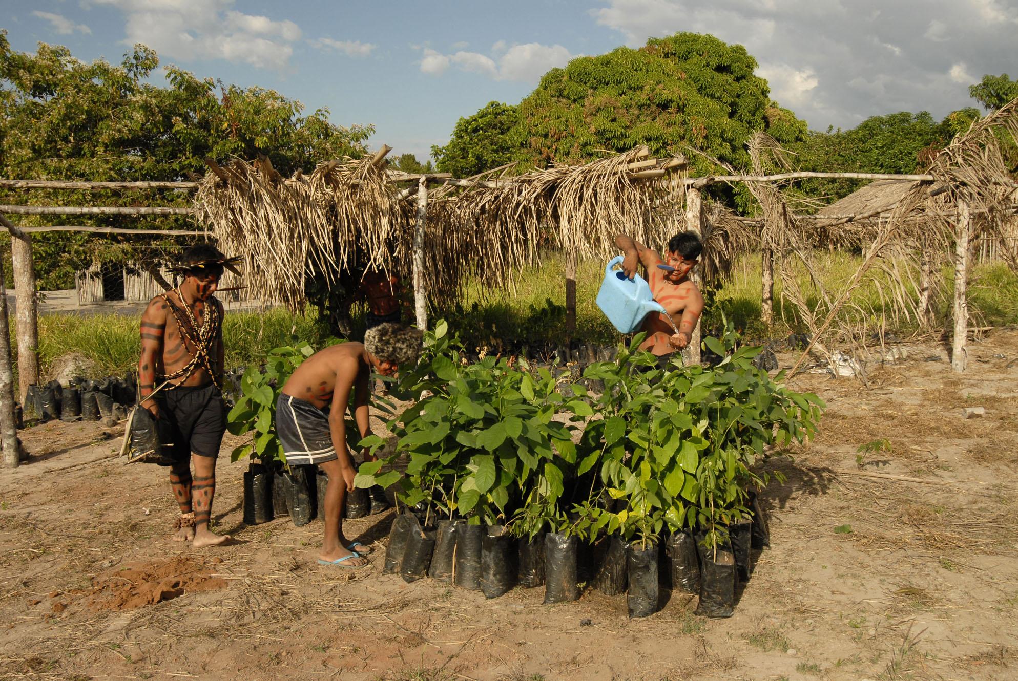 Valoração de Serviços Ambientais – 7: o desafio diplomático de carbono