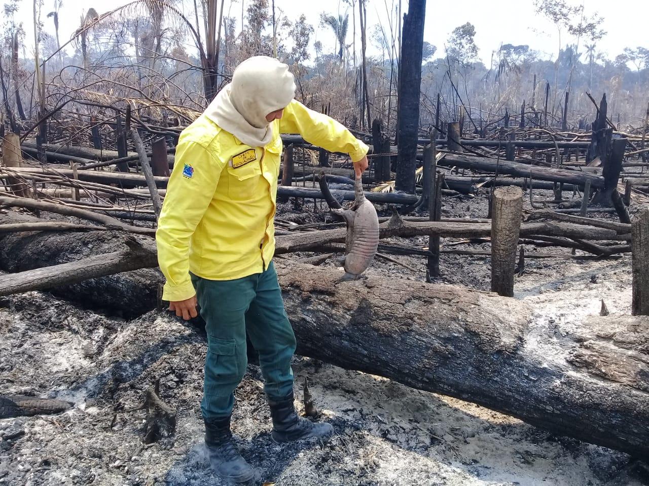 Abelhas, gafanhotos, sapos e tatus foram os mais atingidos pelos incêndios na Amazônia