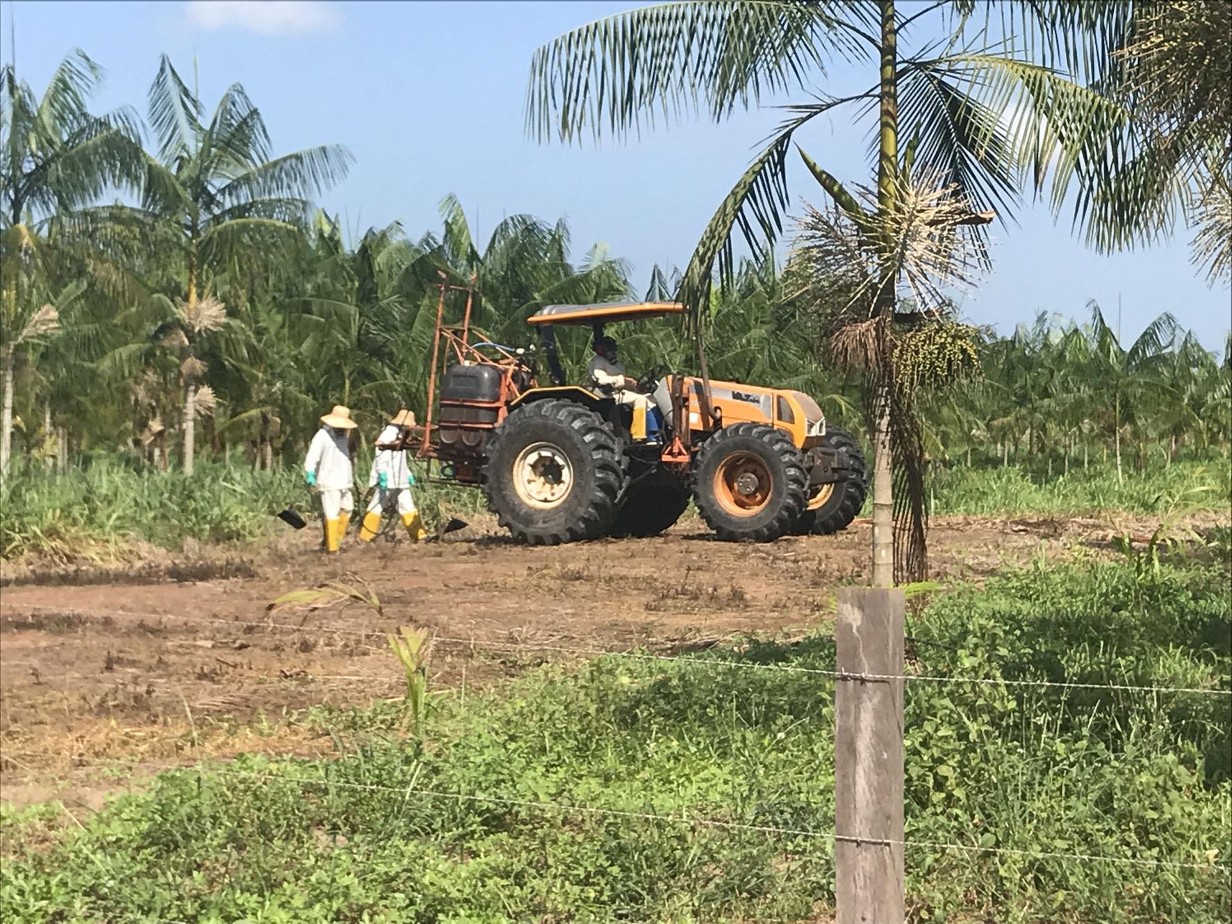 """Suspeita de uso excessivo de agrotóxico põe em xeque a """"sustentável"""" Açaí Amazonas"""