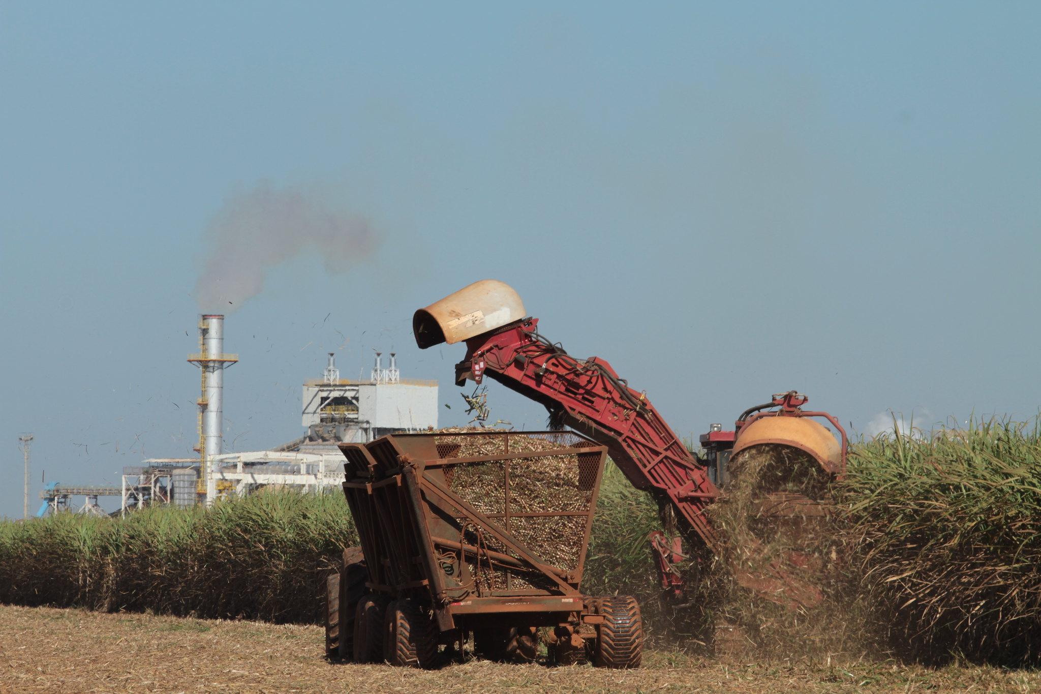 Cana-de-açúcar ameaça a floresta amazônica brasileira e o clima mundial – etanol brasileiro não é limpo