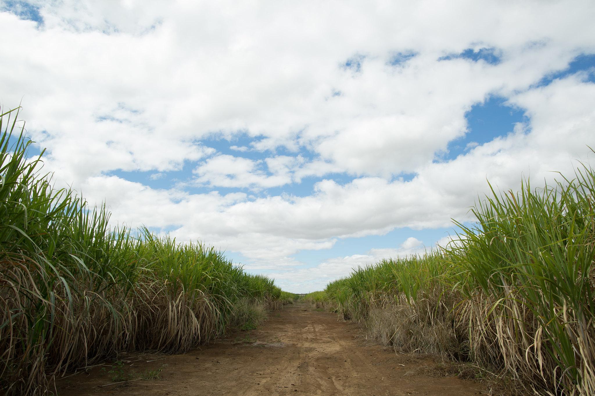 """Bolsonaro é denunciado por """"crime de lesa-pátria"""" no MPF por liberar plantio de cana-de-açúcar na Amazônia"""