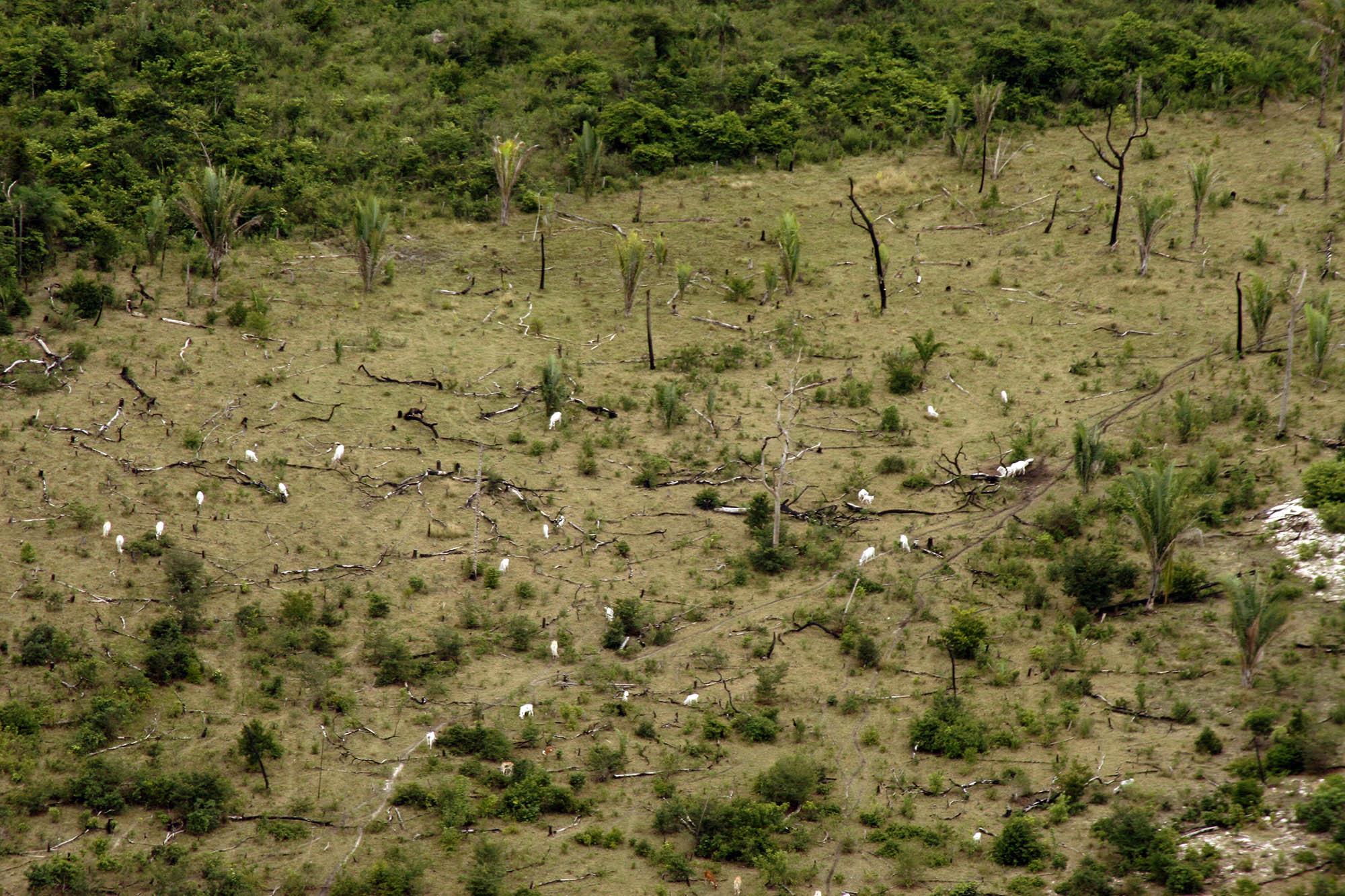 O roteiro da destruição de 1 milhão de hectares