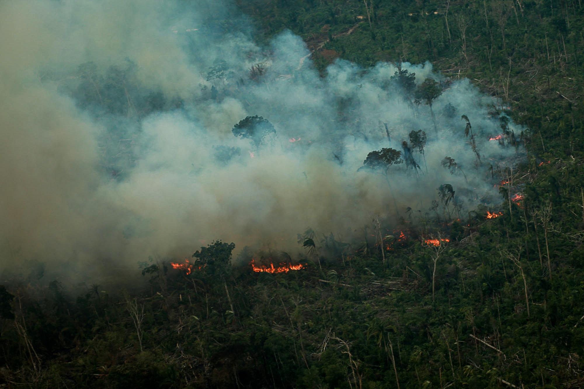 Coronavirus, desmatamento e fogo na Amazônia