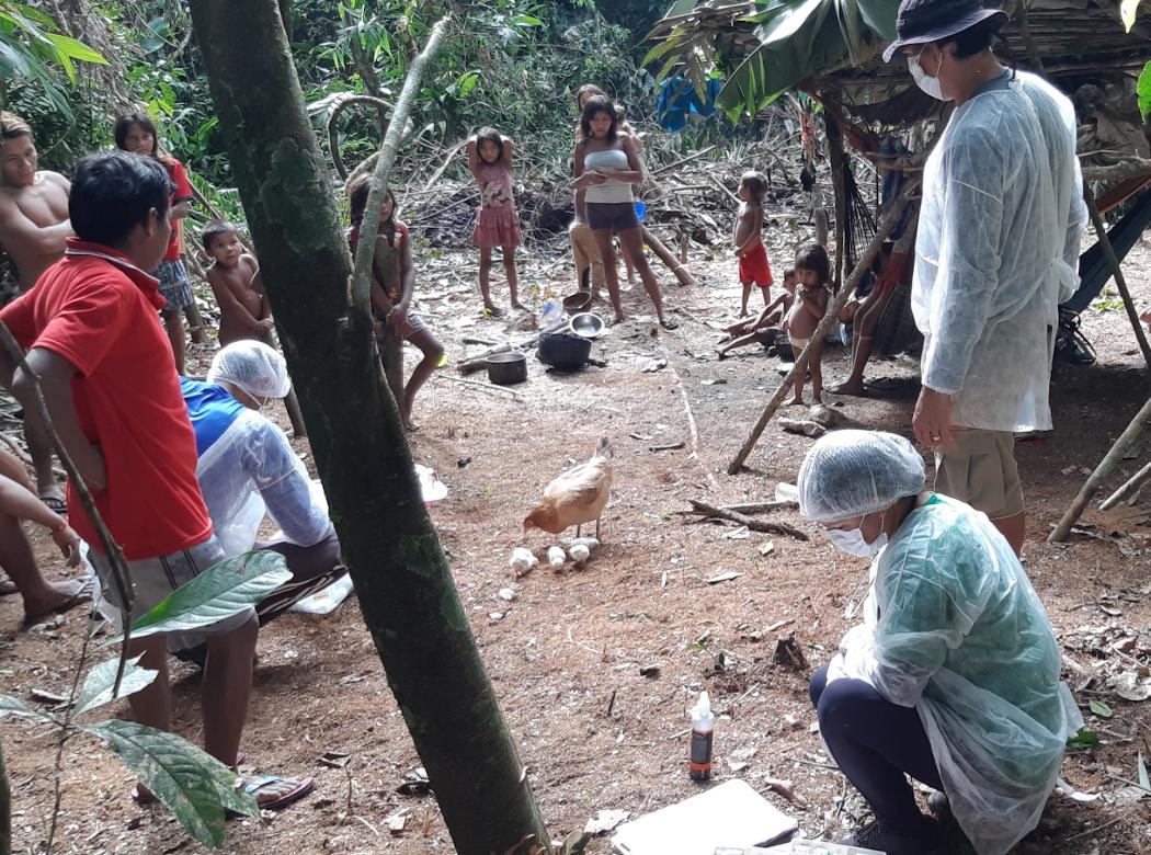 Avanço do novo coronavírus na população indígena é um desastre