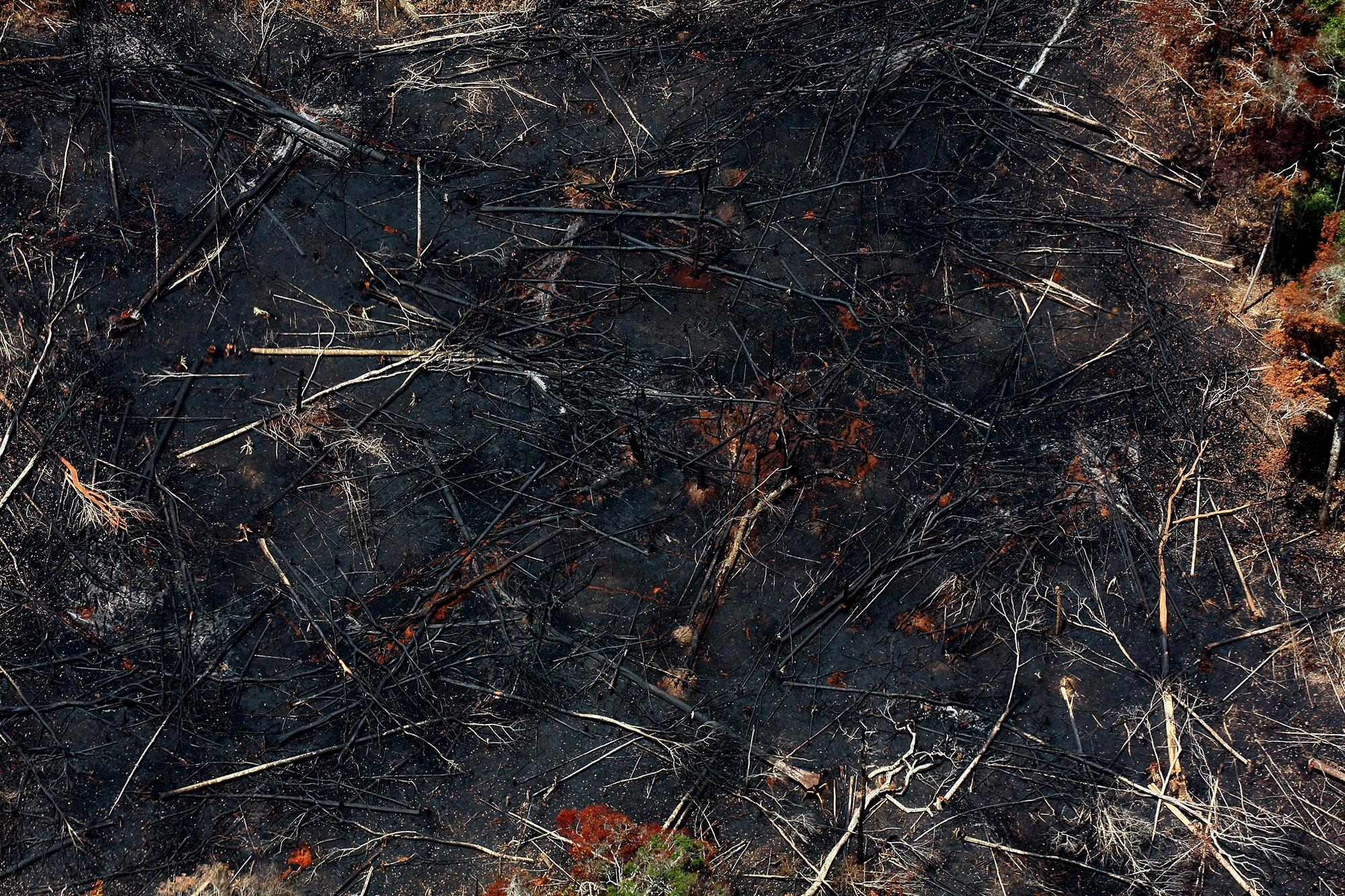 O Brasil mata a Amazônia