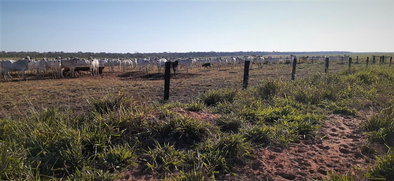 Na pandemia, fazendeiros invadem terras indígenas na bacia do Juruena