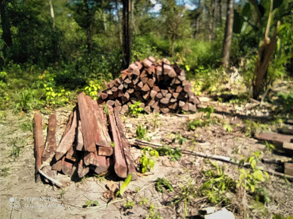 Extração de madeira ilegal na TI Urubu Branco (Cimi)