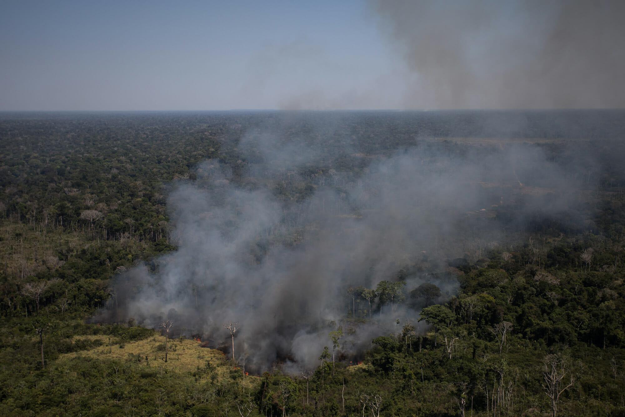 Floresta Amazônica perdeu quase 100 hectares por hora
