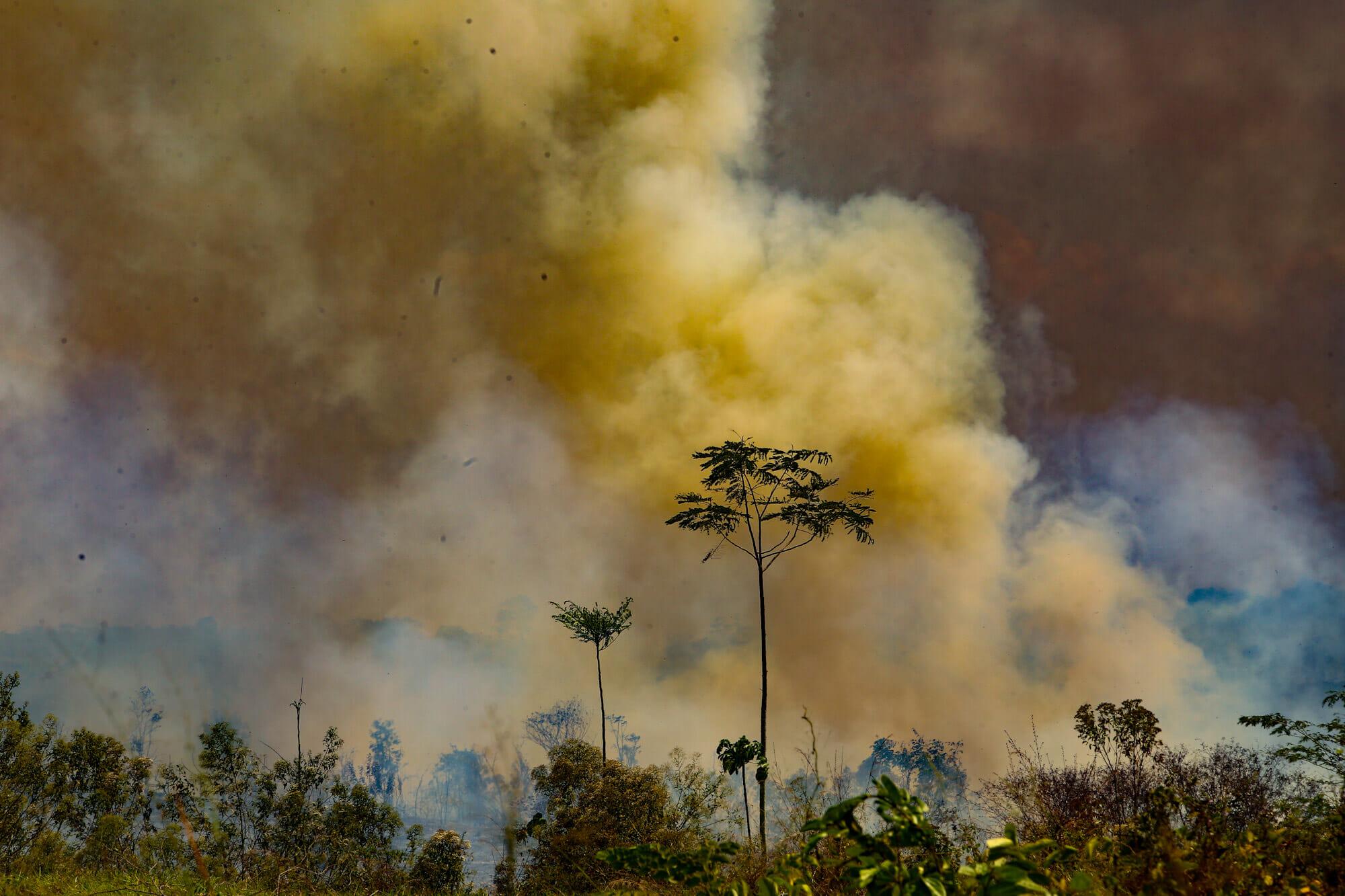 Amazônia em Chamas 20: Três estados lideram o ranking das queimadas na Floresta Amazônica