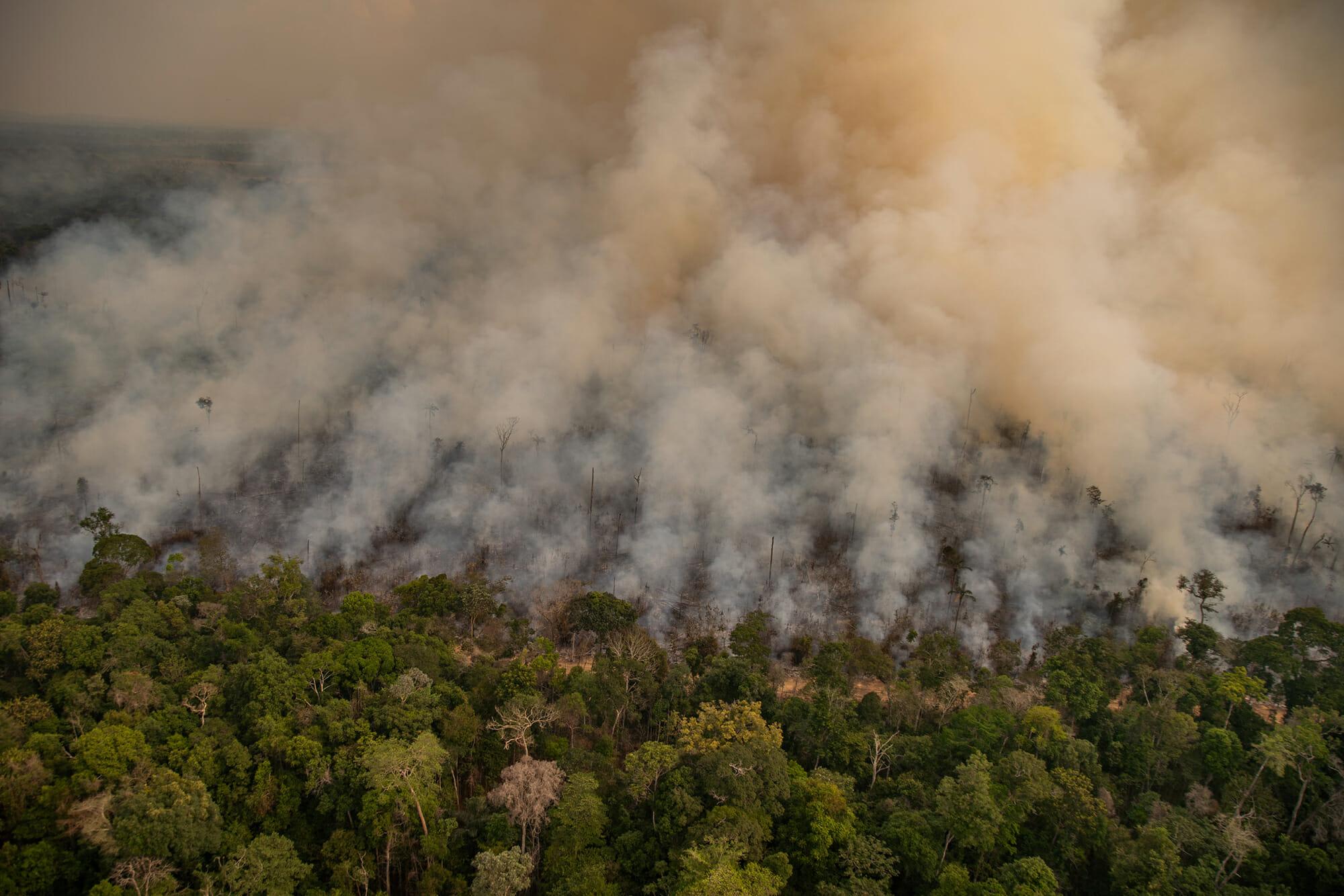 Rondônia vota projeto para redução gigante de áreas florestais protegidas