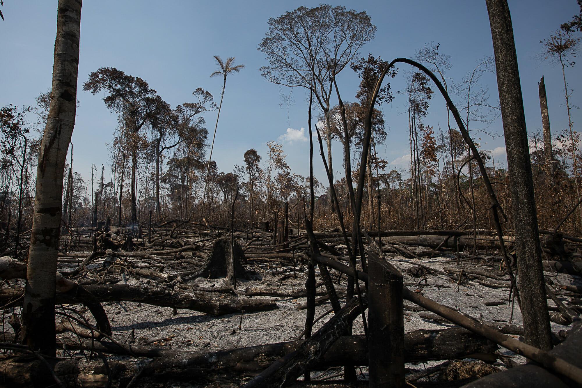 O Desmatamento da Amazônia Brasileira: 13 – Degradação extrema