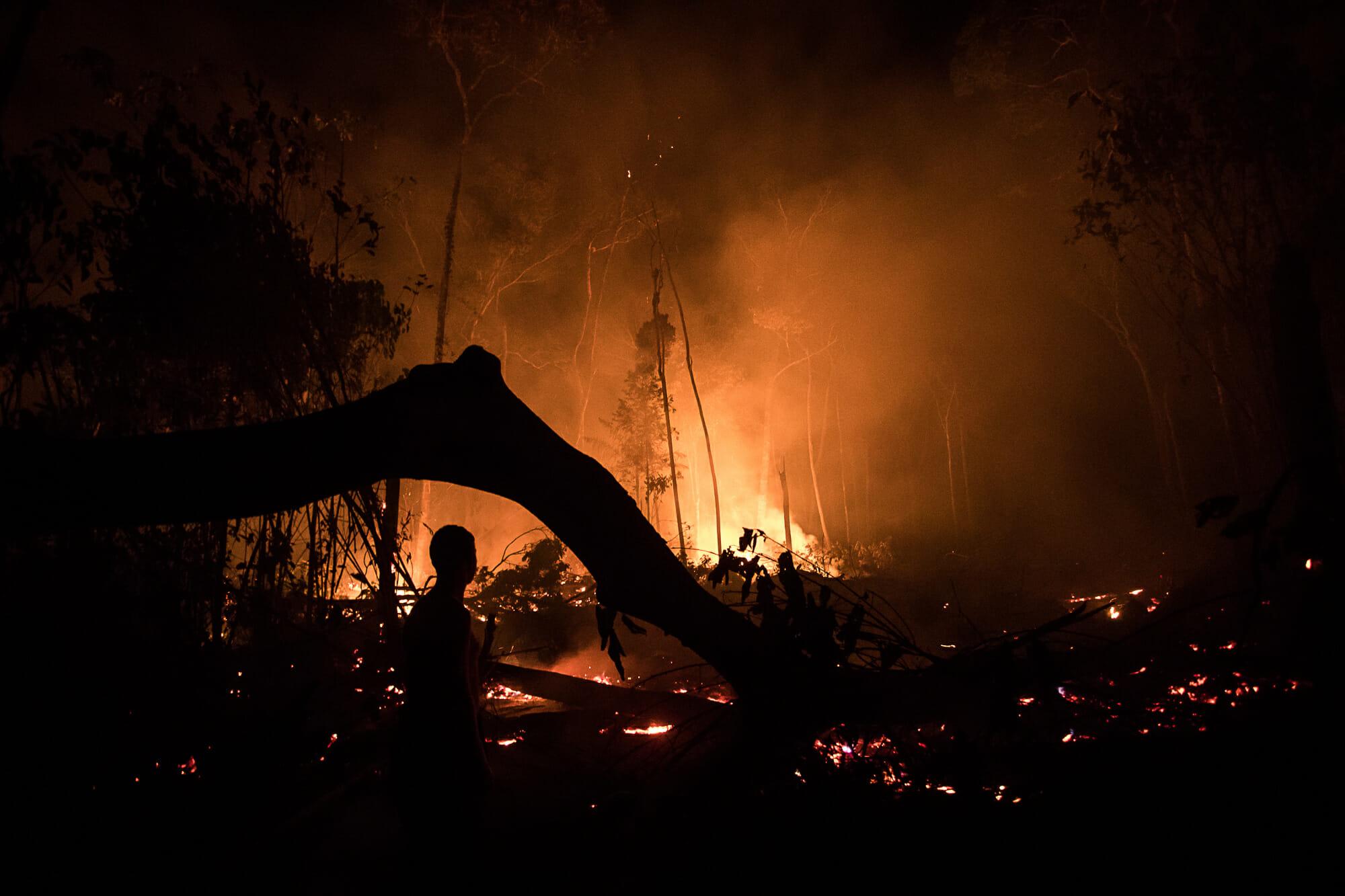Amazônia em Chamas 20: Queimadas consomem árvores e animais no sul do Amazonas
