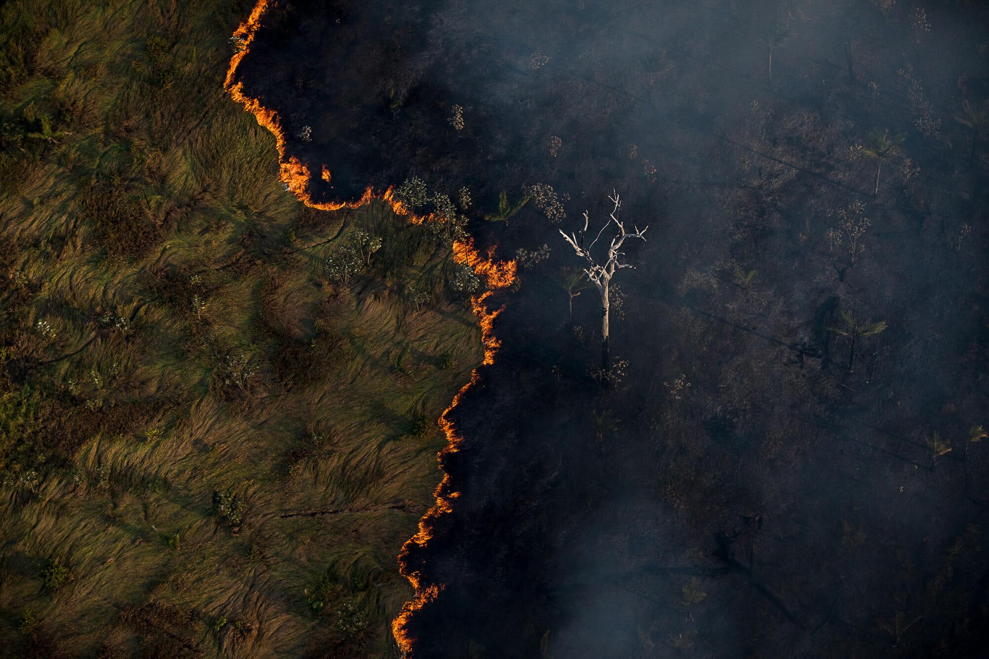 O Desmatamento da Amazônia Brasileira: 1 – Resumo da série