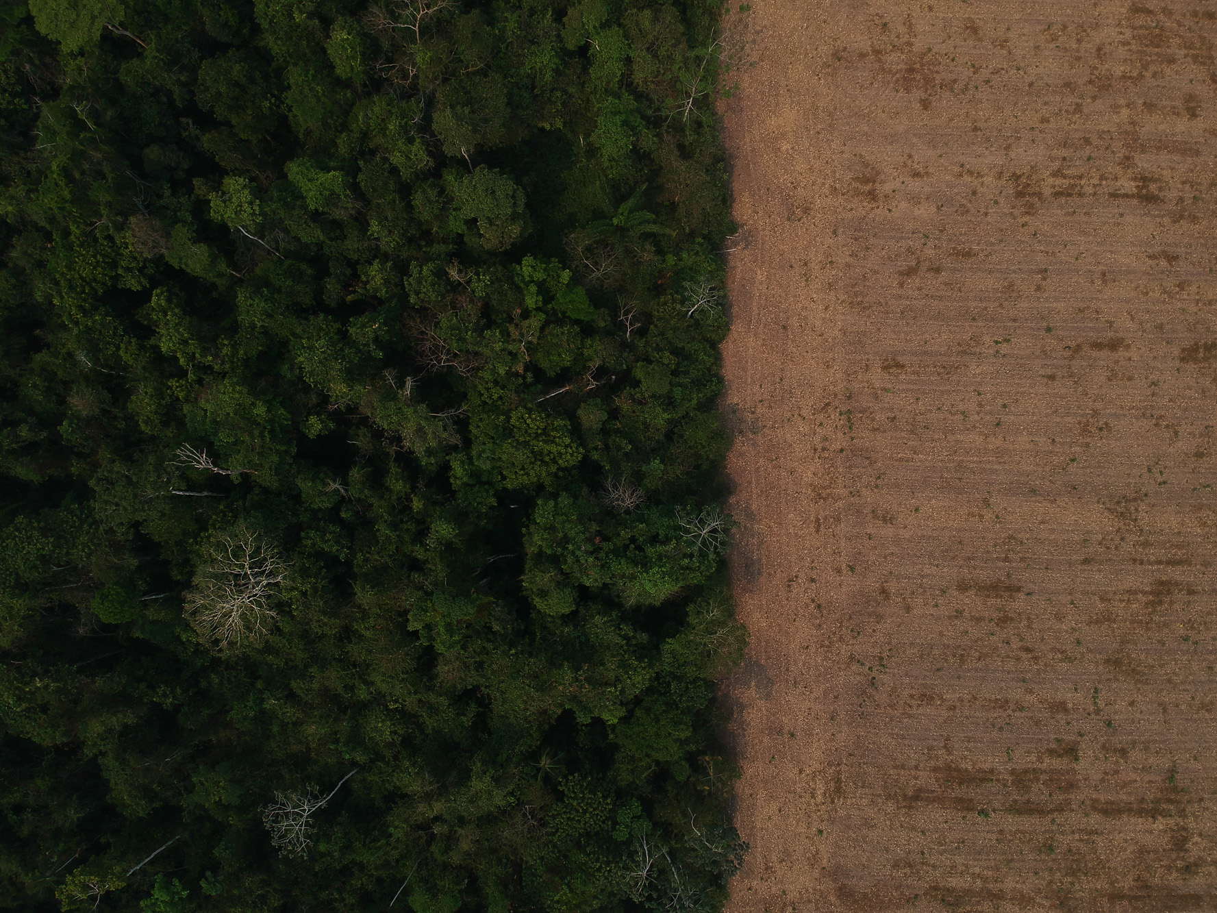 O Desmatamento da Amazônia Brasileira: 17 – Remover motivos ocultos