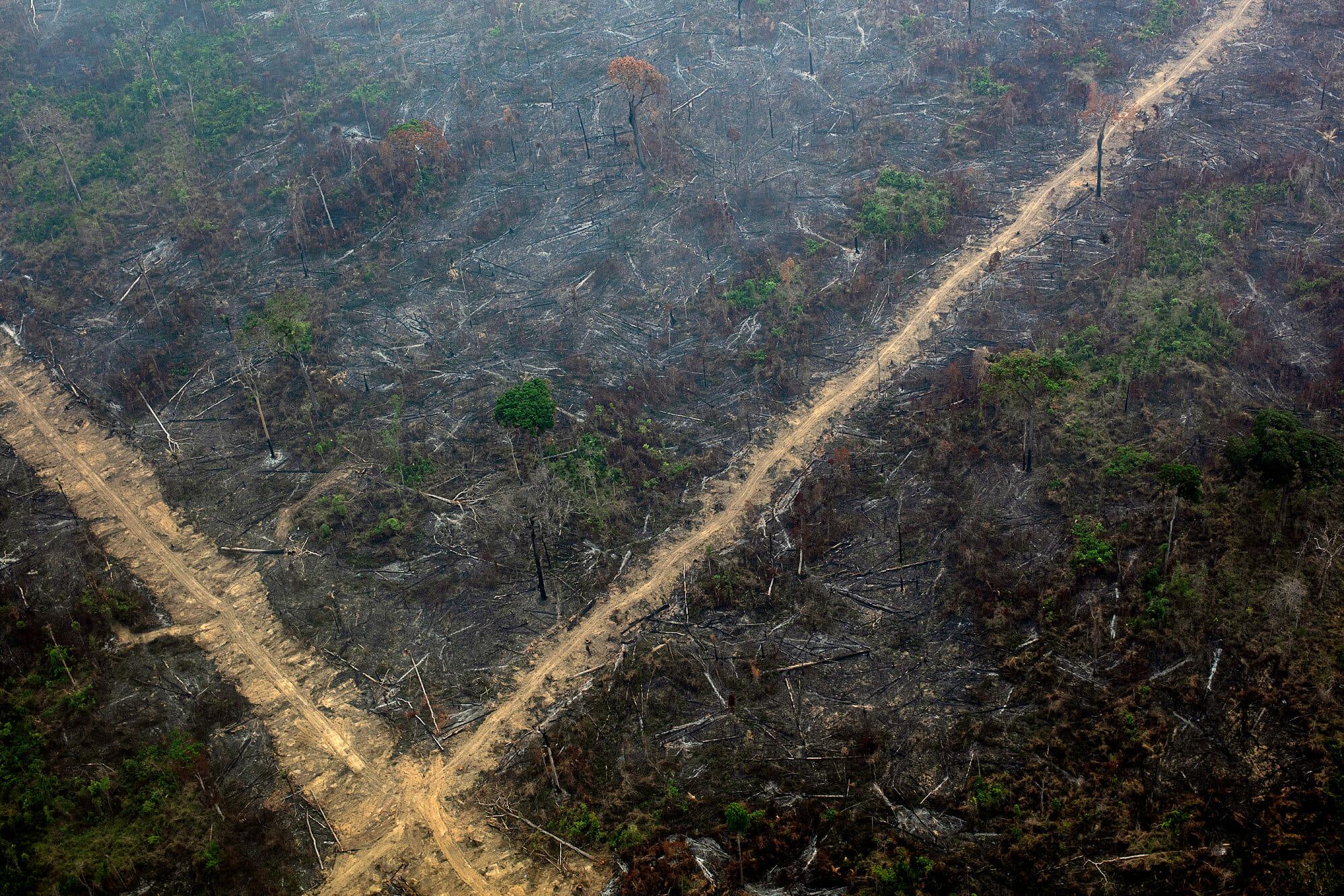 O Desmatamento da Amazônia Brasileira: 3 – Por que o desmatamento é importante?