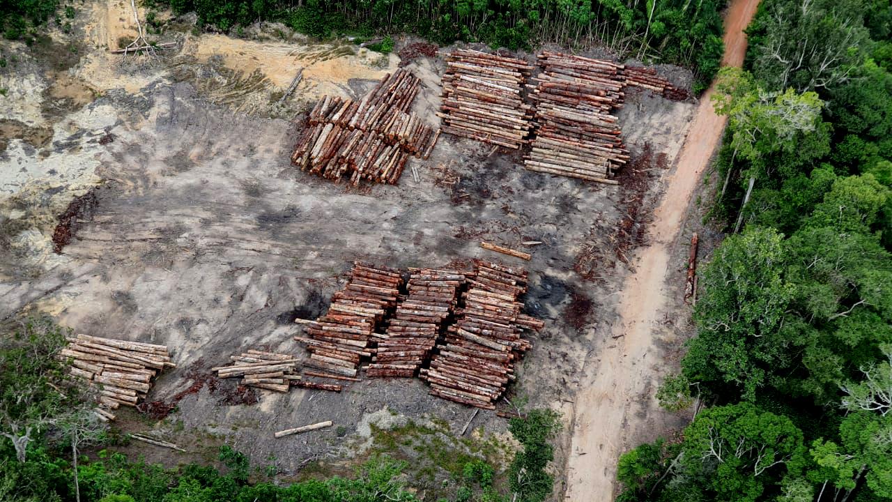 Não tem lockdown para as madeireiras ilegais: a derrubada de Ipês continua em 2021