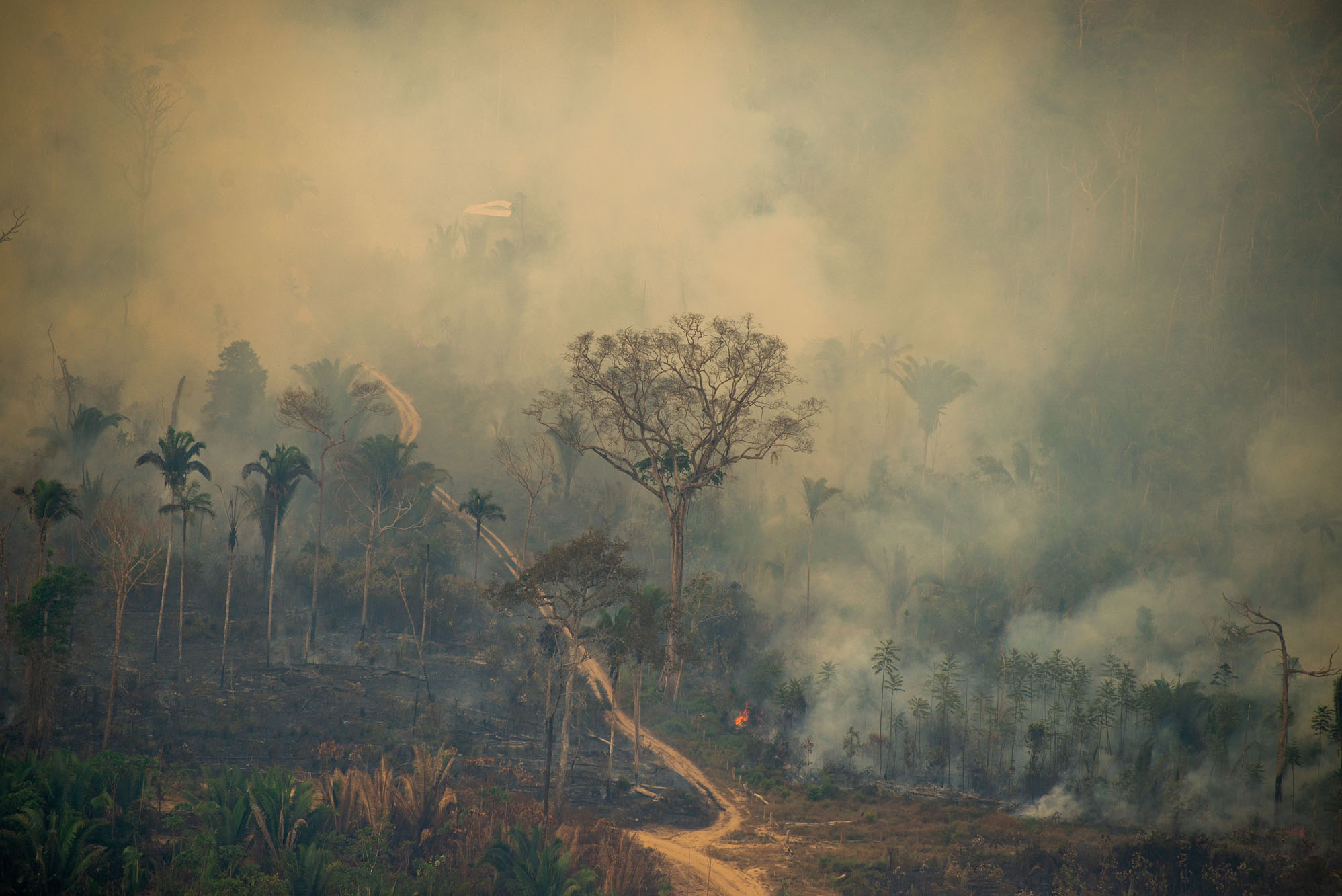 """Rondônia promove um """"liberou-geral"""" na grilagem"""