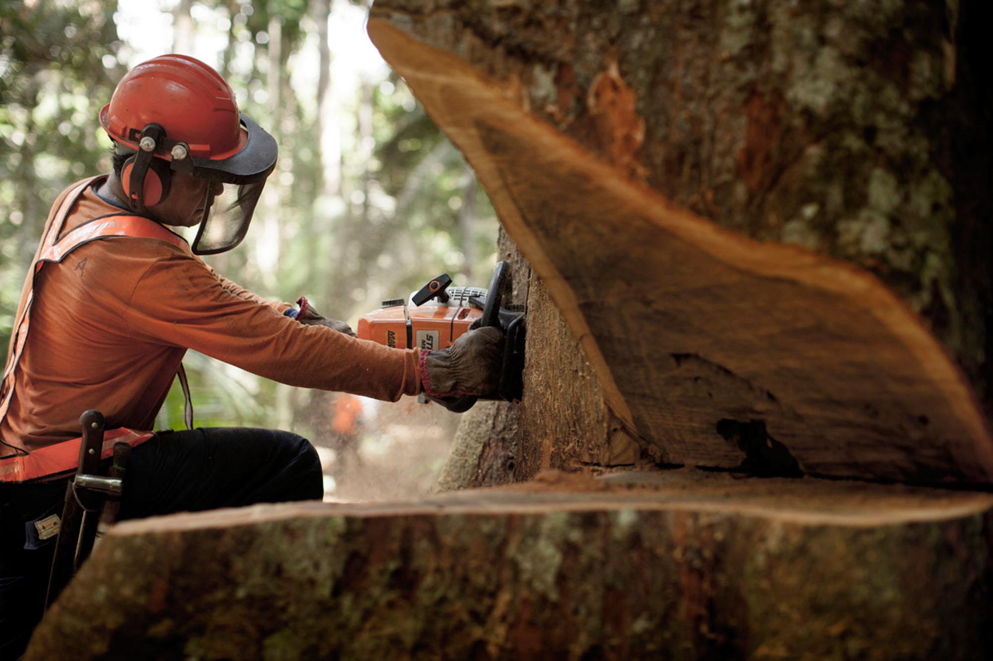 O Desmatamento da Amazônia Brasileira: 24 – Abandone os mitos que desviam esforços da contenção do desmatamento