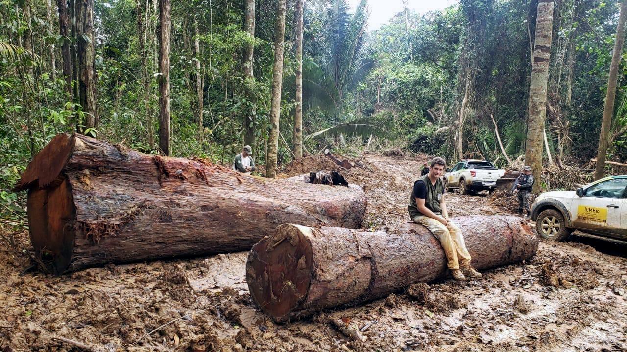 Como o governo Bolsonaro atuou em favor das madeireiras na Amazônia