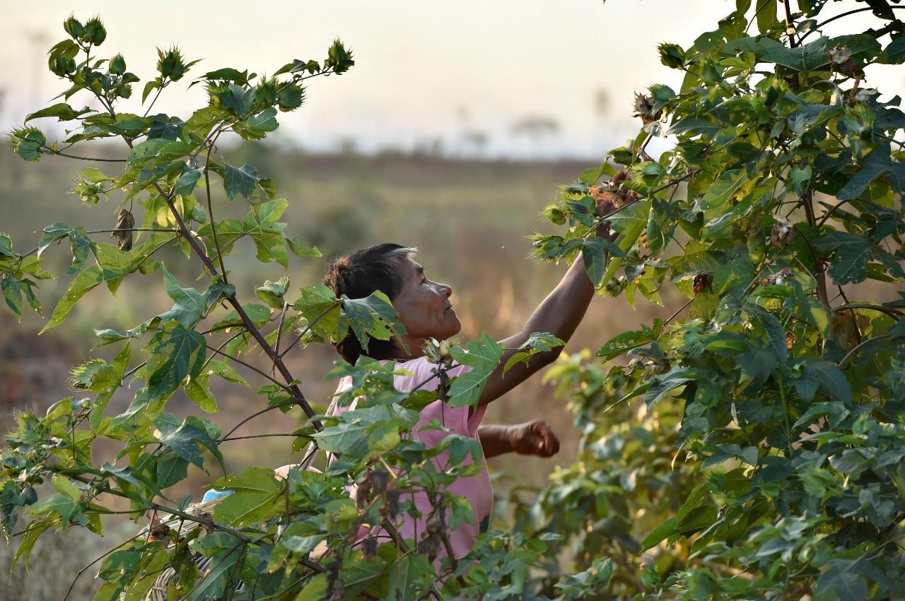 Coletoras de Marãiwatsédé recuperam a floresta